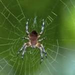 मकड़ी से मिली प्रेरणा….