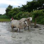 एक किसान की जिंदगी- खलिहान से लाइव